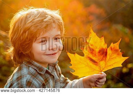 Close Up Portrait Of Autumn Kids Boy. Autumn Is Funny - Lovely Child Boy Has A Fun In Autumn Leaves