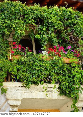 summer balcony with different flowers