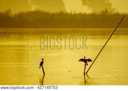 View Of Cormorant Birds On A Pole In The Wetland, In The Hula Nature Reserve, Northern Israel