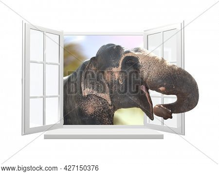 Elephant looking through a window. Cute curious elephant stare at the opened window. Isolated on white background. 3d render