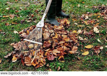 Woman Raking Pile Of Fall Leaves At Garden With Rake. Autumn Yard Work