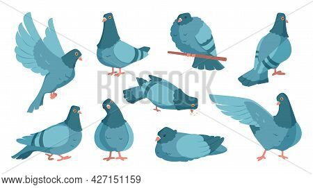 Cartoon Pigeon. Cute Dove Character Standing And Flying. Flock Of Gray Birds In Motions. City Wild A