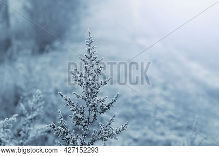 Frost-covered Dry Plants On A Frosty Winter Morning On A Blurred Background