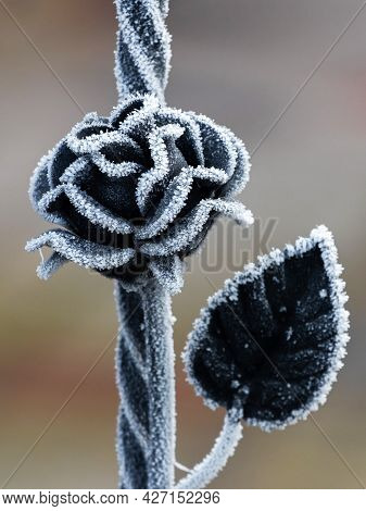 Metal Rose As An Element Of The Fence On A Winter Day Is Covered With Hoarfrost. Metal Fence With A