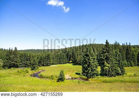 Green Meadow With Meandering Stream Surrounded By Spruce Forests Under Blue Sky - Czech Republic, Eu