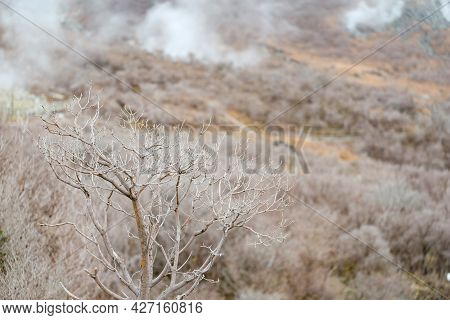 Close Up Dry Bushes Beautiful Branches On Owakudani Hell Valley ,smoky Around Kami Mountain ,japan