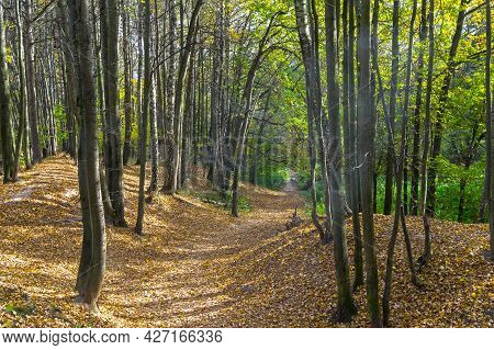 A Path In An Autumn Forest Along The Bottom Of A Small Ravine. Sunny Day In Early October.