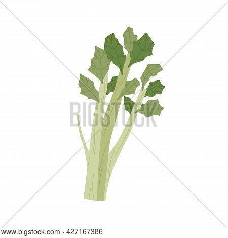 Bunch Of Green Celery Stalks With Leaf. Fresh Leafy Vegetable. Healthy Vegetarian Food. Flat Vector