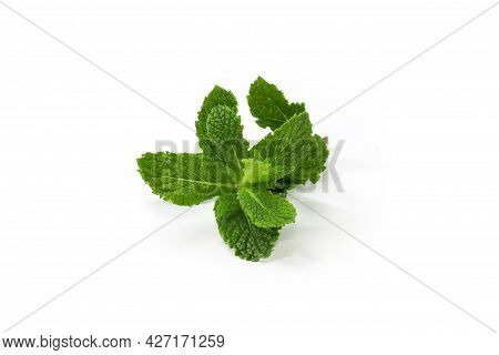 Top Of The Twig Of The Fresh Spearmint On A White Background, Close-up In Selective Focus