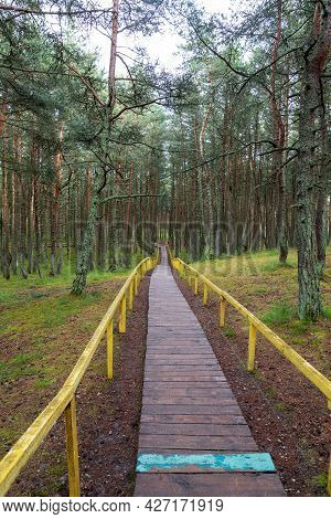 A Path Through The Forest. Beautiful Summer Landscapes. A Wooden Fence Along The Path.