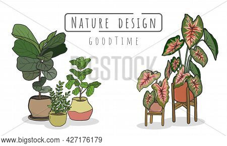 Potted Plants Set, Indoor And Outdoor Landscape Garden Potted Plants Isolated On White.