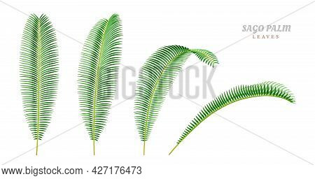 Leaves Of Sago Palm Plant Tree, Isolated Foliage In Different Positions And Sides. Tropical Flowers