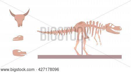 Paleontology And Archeology Museum Exhibits Flat Vector Illustration Isolated.