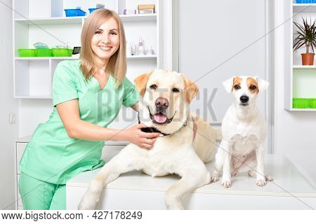 Smiling Veterinarian And Two Dogs At Veterinary Clinic
