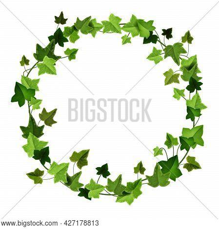 Green Ivy Circle Frame, Climbing Vine Vector Wreath, Liana Floral Garden Border Isolated On White. N