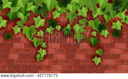 Ivy Plant Vector Green Background, Climbing Vine Leaf, Red Brick Wall Backdrop House Stone Texture.