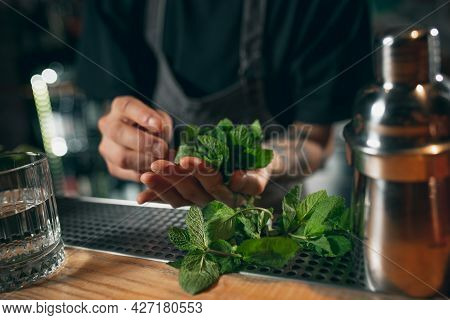 Bunch Of Mint, Juicy Fragrant Greens Lie On Hand Of Bartender And Wooden Tabletop Of Bar Counter