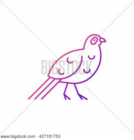Bird Gradient Linear Vector Icon. Mikado Pheasant.taiwan Mountainous Regions. Exotic Forest Inhabita