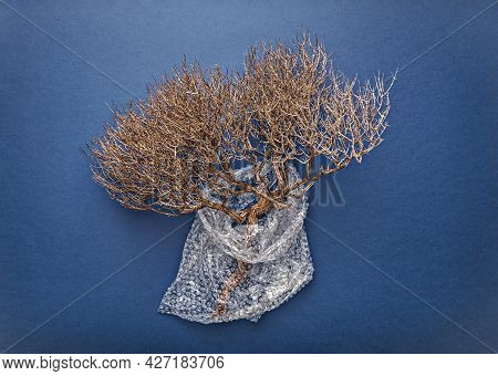 Natural Dry Branch Wrapped In Bubble Wrap On Blue Background. Zero Waste And Consumption Reduction O