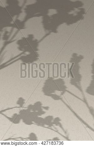 Background with shadow of cotton branch