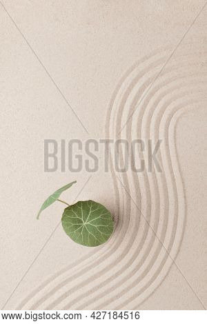 Plant on the beach sand background in health and wellbeing concept