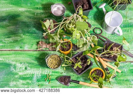 Spring Planting And Gardening Concept. Tools, Watering Can, Flowerpots, Buckets, Decorative Stones