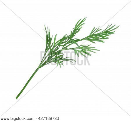 Sprig Of Fresh Dill Isolated On White