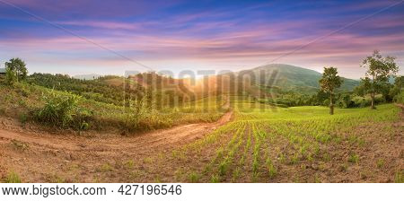 Panorama Green Rice Field With Mountain Background Landscape Of Young Green Rice Field And Beautiful