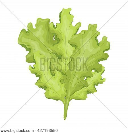 Vector Isolated Illustration Of Natural Lettuce Leaf. Fresh, Wholesome And Healthy Food From The Far