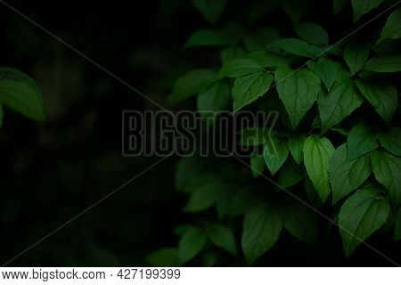 Floral Nature Wallpaper Concept Of Green Leaves In Forest With Moody Lighting And Black Background