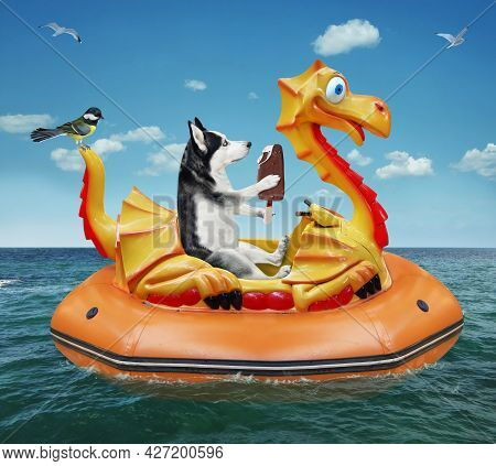 A Dog Husky With Ice Cream Is Floating On An Inflatable Dragon In The Sea At A Resort.