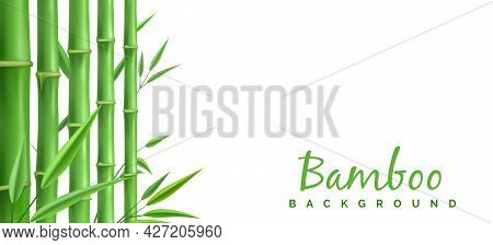 Green Bamboo Stems Decoration. 3d Bamboos Plants Branches Details Vector Design, Realistic Bambok Fo