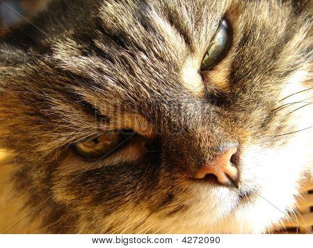 Cat Falling Asleep
