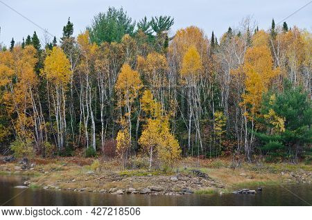 Picture Of Northern Ontario Forest In Autumn Time