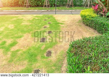 The Lawn In Front Of The House Is Disturbed By Pests And Diseases Causing Damage To The Green Lawns,