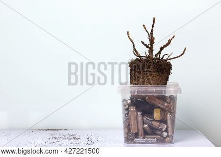 A Dead Plant With An Earthen Clod. Stands In A Container With Corroded Spent Batteries. Waste Recycl