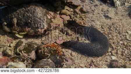 Sea cucumber inside the ocean