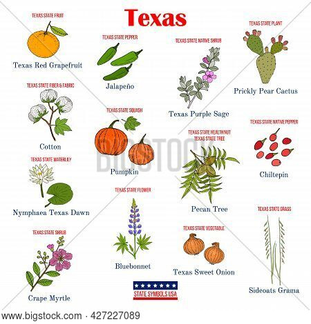 Texas. Set Of Usa Official State Symbols. Vector Hand Drawn Illustration