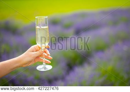 Woman Hand With Champagne Glass On A Lavander Fields Background In Czech Republic