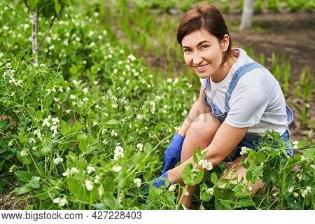 Smiling Woman Nourishing Plants With Water And Fertilizer