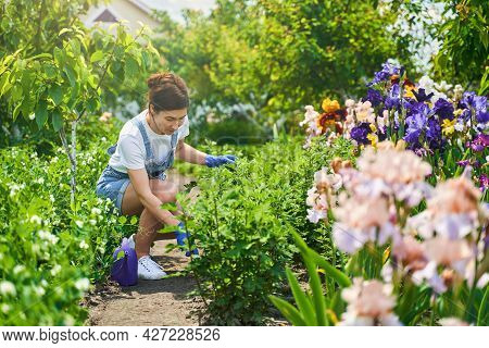 Serious Housewife Working With Special Tool For Flowerbed