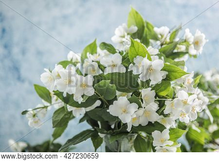 Blank With  Bouquet Of Jasmine Flowers On A Blue Background. Spring Flowers.spring Floral Background