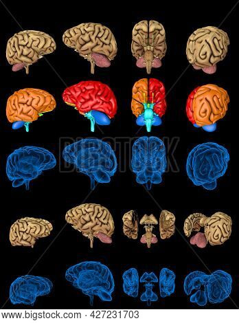 100 Megapixels Set - Human Brain With X-ray Examination Style Image And Different Colored Zones Isol