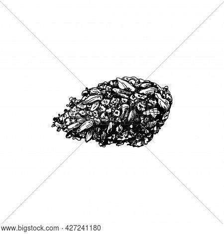 Marijuana Buds. Vintage Vector Hatching Black Hand Drawn Illustration Isolated On White Background