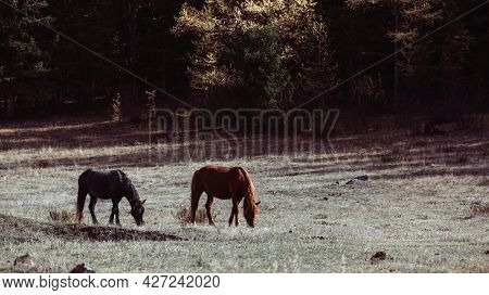 View of the Horses graze in the foothills of the Altai Republic, Russia.