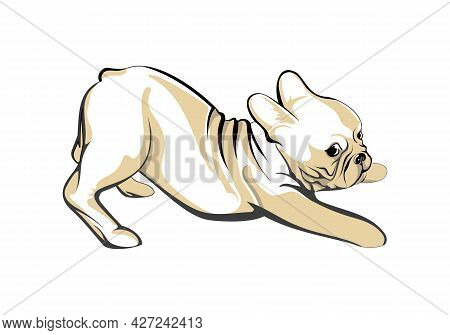 Hand-drawn Sketch Cute Pug Puppy Isolated On White Background. Vector Illustration For Posters And P
