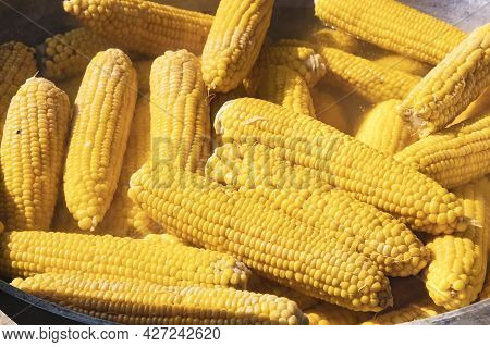 Lots Of Bright Yellow Ears Of Boiled Corn In A Large Cauldron. Corn On The Cob Is Boiled In A Cauldr