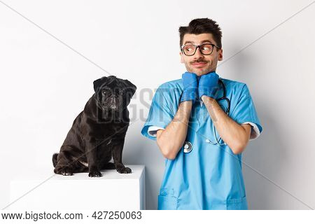 Image Of Handsome Male Doctor Veterinarian Looking At Cute Black Pug Dog Sitting On Table, Admiring