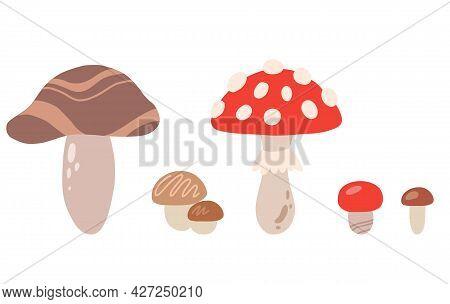 Set Of Cartoon Different Mushrooms. Simple Flat Illustration Of Fungus. Boletus Mushrooms, Porcini M