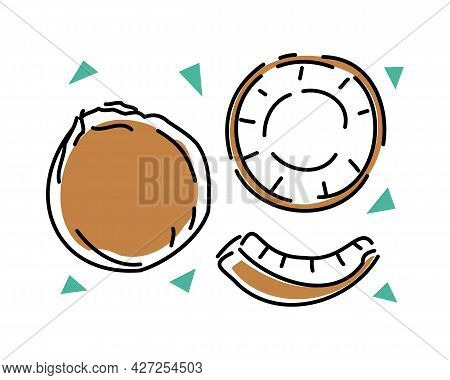 Whole Coconut And Slices On A White Background Set. Vector Abstract Illustration.